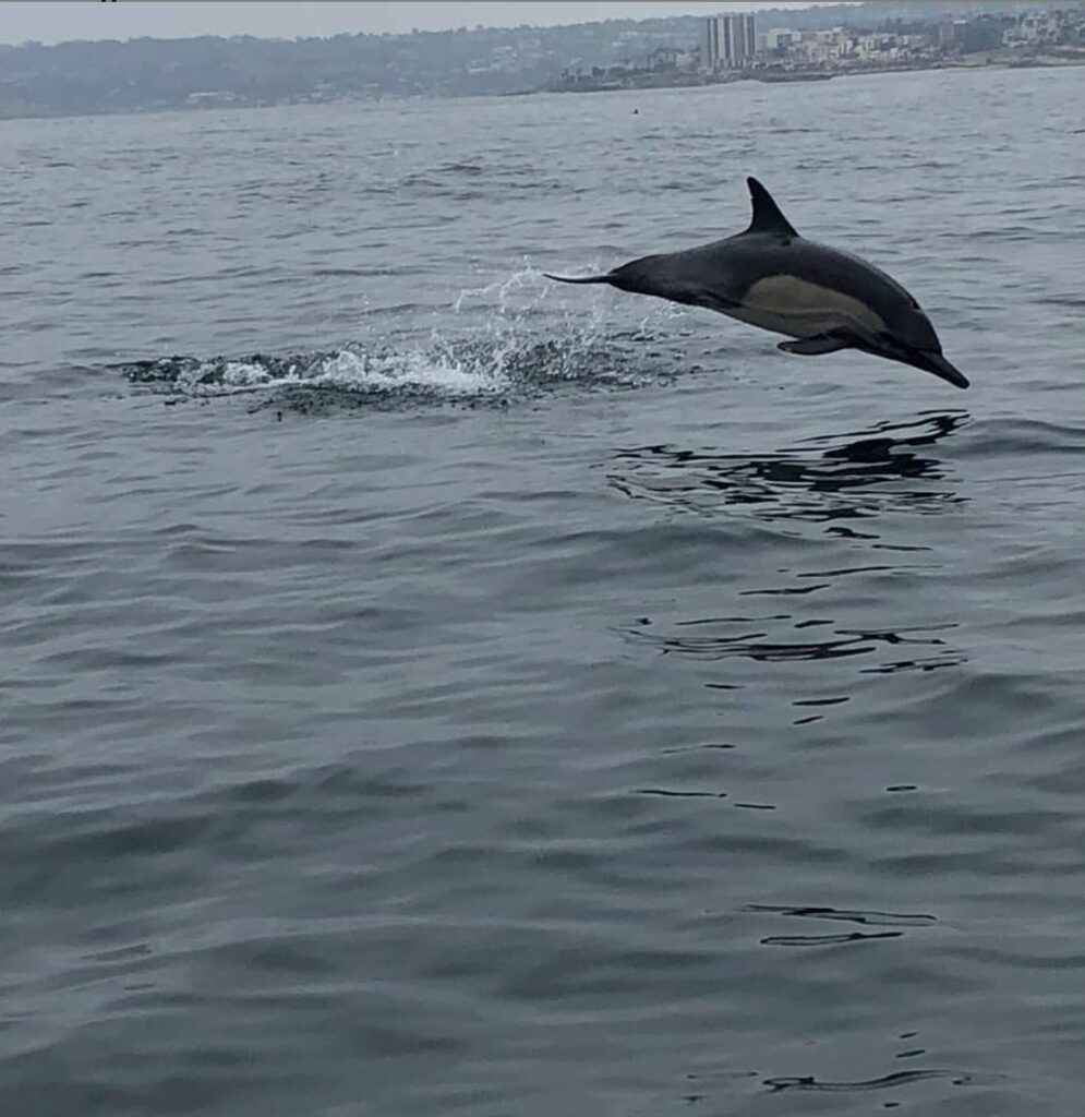 Dolphin Jumping on San Diego Best Whale Watching adventure